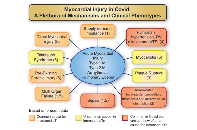 Myocardial injury in severe COVID-19 infection